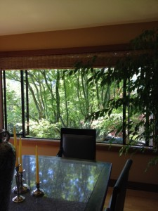 Forest tapestry inside the dinning room. Aesthetic Pruning can enhance how the tree is experienced from the inside as well as outside view.