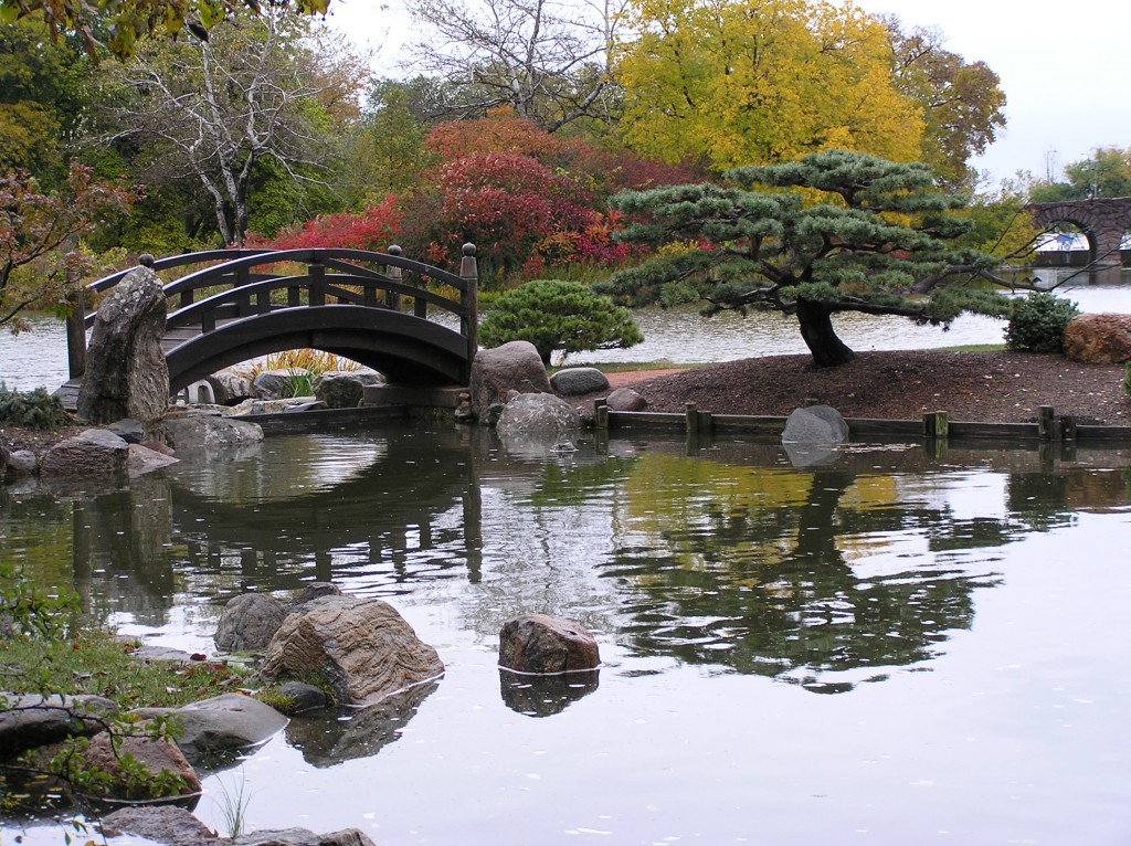 The signature pine in the garden. It is beautiful with the bridge, the water behind and the reflection in the front.