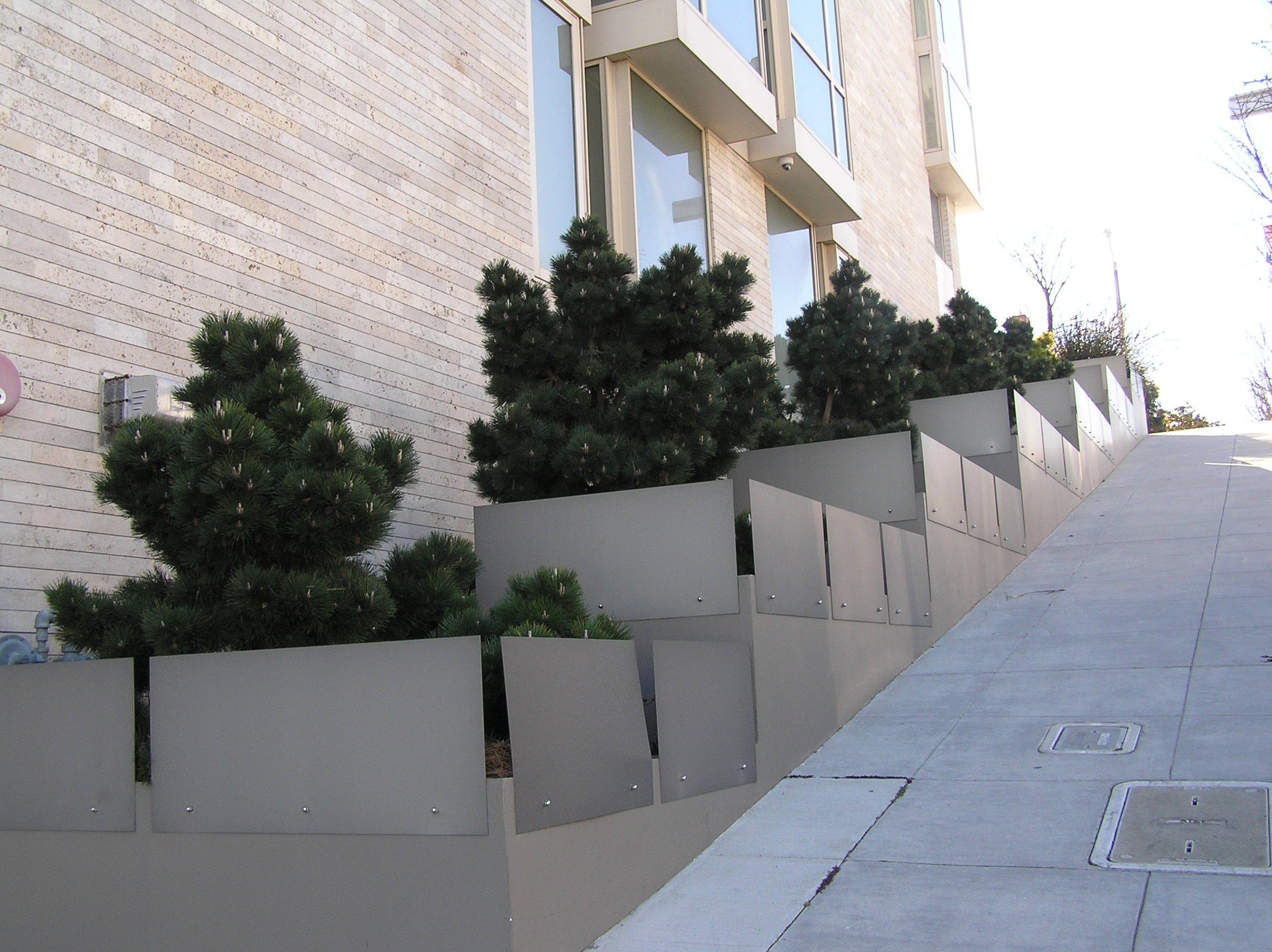 These pines work well to add structure, texture and color all while keeping eager tourists out of the planting beds.
