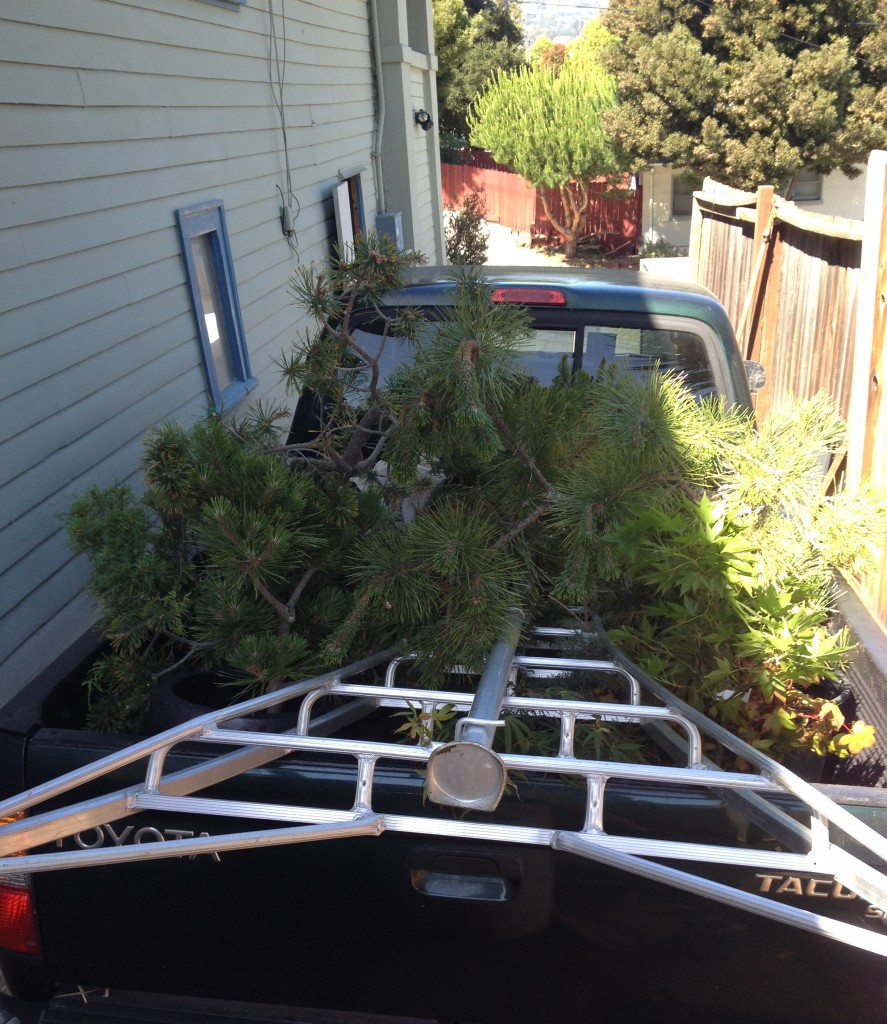 There are 30 trees packed into the bed of that truck. Mostly conifers and a few maples.